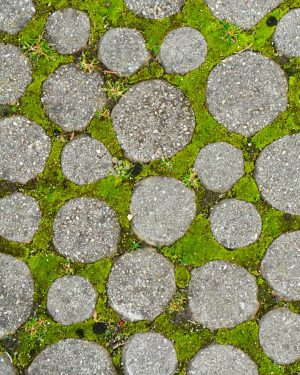 Microcosmic tune in urban park area🌿🏞️⛲🌄##circles #stonescene #greenspace #chain #desktop #betweenstones #lifeanywhere #viennahunt #parkground #greenspell #counting #portraied...