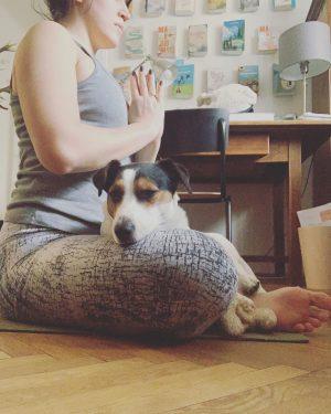 Hab das mit der Morning Meditation auch mal probiert. Bin nicht wirklich reingekommen. Er schnarcht.🧘♀️🙄🐶 #yogainspiration #yogapractice...