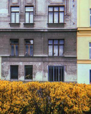 #spring #Frühling #wien #Vienna #Fassade #facade #architecturephotography #architecture #architektur #nature #natur #layers #schichten