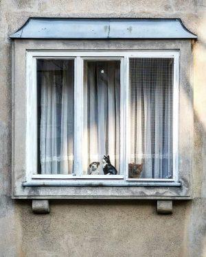 Finde den Unterschied #wien#vienna#döbling #stayhome#igersaustria #igersaustriaathome #wieninzeitenvoncorona #windowtuesday#meinwien #fensterdienstag#catlovers #catsofinstagram#fakefriends #falschefreunde#windows #viennafrommywindow #quarantine#quarantäne #catsanddogs#decorating #wiennurduallein#unserwien #wienmalanders#wienliebe #wieneralltag#fenster...