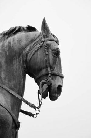 #travel #sculpture #horse #warhorse #museumsquartier #vienna #austria MQ – MuseumsQuartier Wien