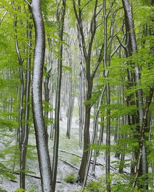 🌳 Ein kleiner Wintereinbruch im Biospährenpark Wienerwald - auf unserem April-Foto des aktuellen Alpenvereinskalenders 2020. 🌲 #lebensraum...