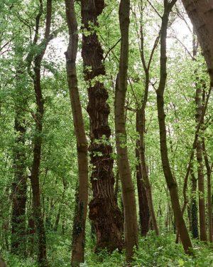 The trees are dancing 🕺💃 #35mm #analogpotrait #vintage #analog #kodakgold200 #kodak #analogphotography