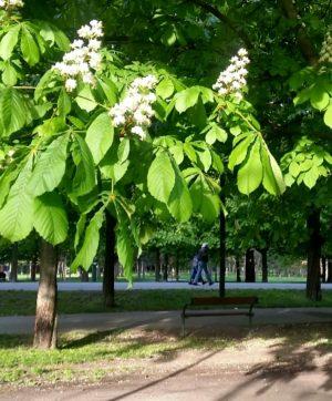 Archivbild 32 Tag #StayHome Prater/ Hauptallee _______________________ #Prater #hauptallee #kastanienbaum #impraterblühendiebäume #Covid_19 #coronavirus #stayhome #wien #vienna #vienne...