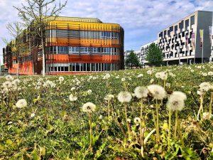 Nature in the City #wu #wuvienna #wuwien #leopoldstadtwien #wien2 #studentlife #slowingdown #natureinthecity #studentenleben #stadtwien #viennagram #vienna_city #naturephotography...