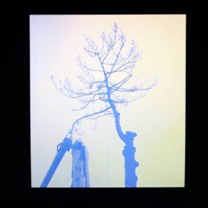 Kunstwelt Special VIENNA. Secession #ArtistClips Kurzvideos von Künstler*innen, die in den letzten Jahren ...