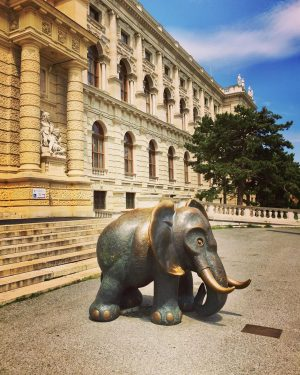 🐘#naturhistorischesmuseumwien 🐘 The size of a #babyelephant is the recommendation for #socialdistancing by ...