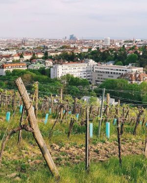 Blick vom Schafberg auf das sonntägliche Wien. 😊 Vielen Dank an @vie4rt fürs ...