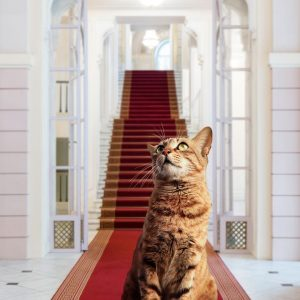And while we are all waiting eagerly to visit the ALBERTINA Museum again, Vienna's famous cat #Mietzi...