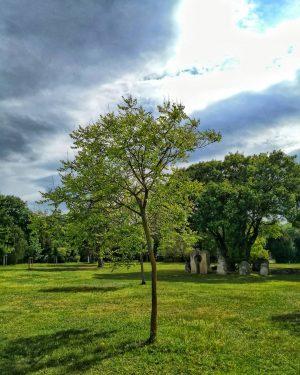 Wien, Wien nur du allein sollst die Stadt meiner Träume sein... 🎶 #vienna #zentralfriedhof #zentralfriedhofwien #cemetery #centralcemetery...