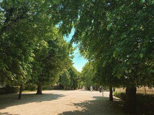 #schönbrunn #park #wien #vienne #igersvienna #igdaily #light #perspective Schönbrunn