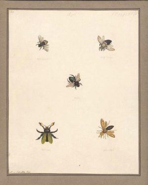 Heute feiern wir den noch recht jungen Internationalen Tag der Biene. 🐝 🍯 Er wurde von den...