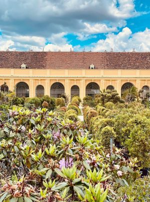 no visitors today at the orangerie of schönbrunn palace - the inspiration for our citrus themed fragrance...