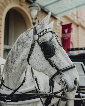 """The best way to discover Vienna - start a """"Fiaker"""" horse carriage tour right in front of..."""