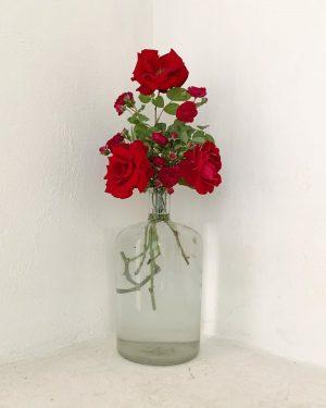 red #ourgardenflowers #park_vienna #südurgenland #wien