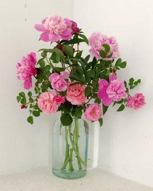 pink #ourgardenflowers #park_vienna #südurgenland #wien