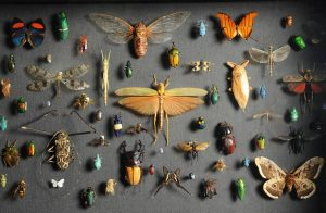 Have you ever been to our exhibition hall with insects? Numerous bugs, flies, ...