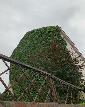 es grünt so grün. #grünefassade #fasholdgasse #hietzing #beverlyhietzing #wienliebe #wienamsonntag #wonderlustvienna #welovevienna #1000thingsvienna ...