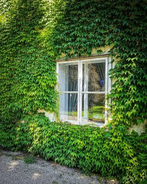 #Greeny #wall and a #window At #PalaisLiechtenstein ( #Liechtenstein #Garden #Palace ) in #Wien , #Österreich (...