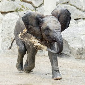 Happy Birthday, Kibali! 🎉 Unser Elefanten-Mädchen wird heute ein Jahr alt. Sie liebt es, geduscht zu werden....