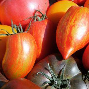 Wie nennt ihr diese roten Früchte?🍅 Unser BIO-Lebensmittel der Woche ist die Tomate - in Österreich auch...