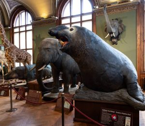 🌍 AROUND THE WORLD AT NHM WIEN🌎 We have reached the last day of our world tour...
