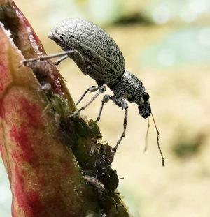 Unknown creature... The plant is full of its milbae... #insects #beetles Botanischer Garten der Universität Wien