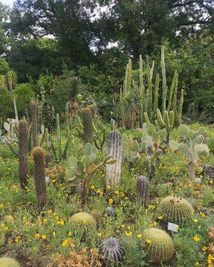 #botanischergartenwien; #cactusesofinstagram; #uniteandtakeover Botanischer Garten der Universität Wien