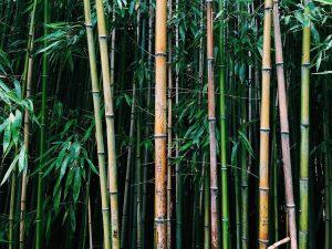 🎋 . . . . . . #wien #vienna #austria #österreich #europe #nature #bamboo #summer #travel #travelling...