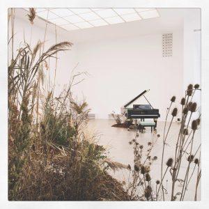 Ein Eiland Natur im Ausstellungskontext: Bei dieser aus dem Wiener Außenraum in den tatsächlich sehr blanken White...