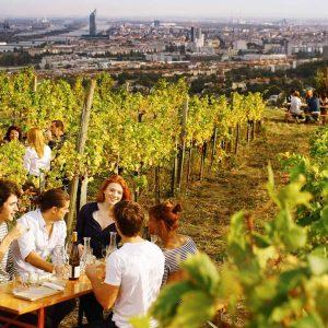 Heurigenfeeling inmitten der Großstadt 👉 das gibt´s so nur in Wien 🍇😍 Die besten Heurigen Wiens findest...