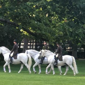 #dasglückauferdenliegtaufdemrückenderpferde Burggasse Wien