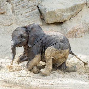 Sich im Sand zu wälzen macht nicht nur Spaß 😛, sondern dient auch ...