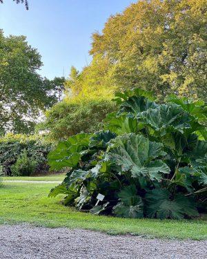 Ботанический сад Вены ⠀ Сад прямо соединён с парком Бельведер. Он был основан в 1754 году во...