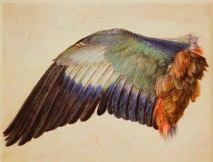 Albrecth Dürer Wing of a Blue Roller #albretchdürer #albrechtdurer #germanart #vienna #viennaisbeautiful #albertinamuseum ...