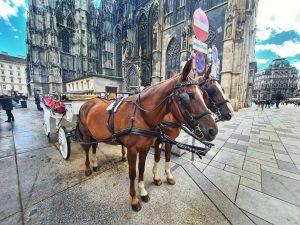 Vie Love #viennaaustria #vienna #photos #potd #horse #kutsche #tourist #photooftheday #photography #travel #travelphoto ...