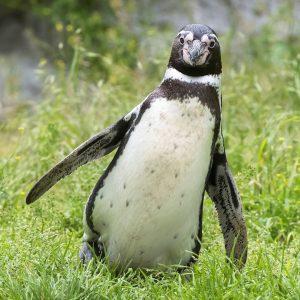 Pinguine haben immer kalte Füße. 🐾 Kommt euch das bekannt vor? 😜 Bei ...