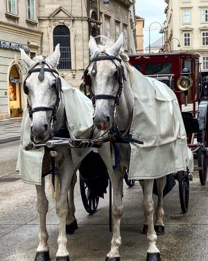 #rainyday #vienna #monday #horsesrainrugs #october5 Stephansplatz