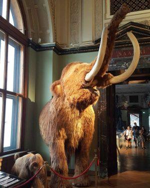 Mammoths, 12 000 years BC #mammoth #museum #natural #history #sightseeing #vienna #instatraveling #мамут ...