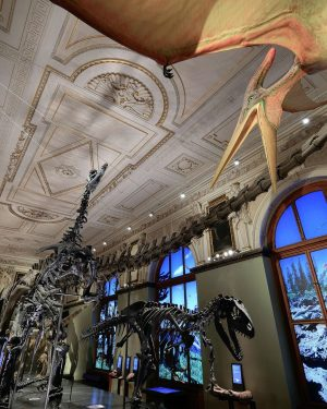 Happy Weekend with a view into our #dinosaur hall! 😎🦕 And: it's still ...