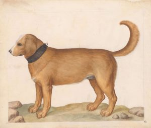 Wir wünschen allen Hunden, die so unterschiedlich sind wie Ihre BesitzerInnen, einen herrlichen Welthundetag! 🦴🐶🐕🐕🦺 🐩🐾 (Aquarelle,...