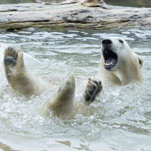Gut gelaunt starten wir in die neue Woche! 🐾 Unser Eisbären-Mädchen Finja hat ...