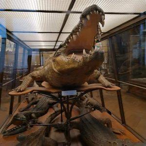 NhM Naturhistorisches Museum Wien