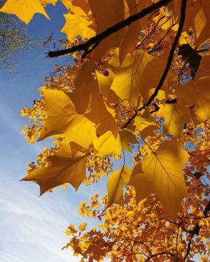 🤓❤️ #sonnenlicht #baum #herbst #wien #vienna #love #autumn #sunlight #austria #österreich #indiansummer #viennalove ...