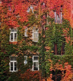 Colores de otoño #tuguiaenviena #paseandoporviena #patiosdeviena #wien #viena #vienna #vienne #secretplacesaustria