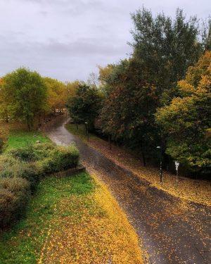 Fall colors #wienstagram #donauinsel #igersaustria #igersvienna #portuguesemviena #fall #austria #photography #pictureoftheday #bilddestages