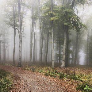 Mystischer Wienerwald 👀 Lainzer Tiergarten