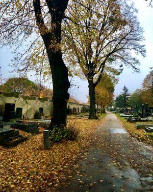 November Day 🍂 #zentralfriedhof #friedhof #zentralfriedhofwien #wiensimmering #autumn #allerheiligen #allerseelen #goldenautumn #novemberrain #igersvienna #autumncolors #viennagram #wienstagram #autumnisyellow...