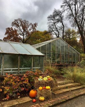 😍#kürbiszeit 🍁🎃🍂 #strollingaround #botanischergartenwien #schlossbelvedere #pumpkinseason #november2020 #herbstinwien #10000schritte #keepyourdistance #staysafe #autumninvienna #wien🇦🇹 #wienliebe #wienstagram #meinwien #vienna🇦🇹...