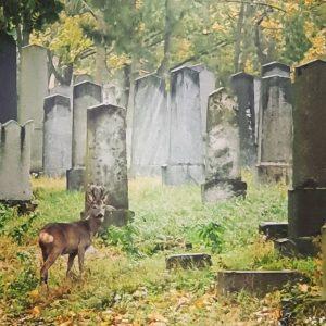 Live although the sadness #austria #autriche #österreich #wien #vienna #vienne #cemetery #details #cimetière #cimiteroebraico #jewishcemetery #jewish #life...